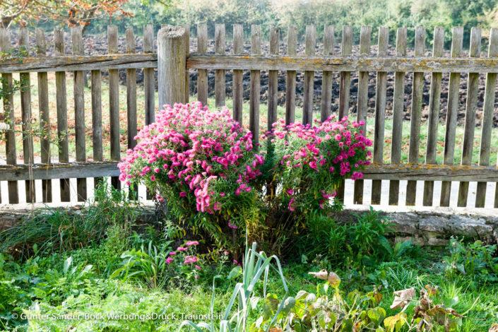 Blumen Zaun