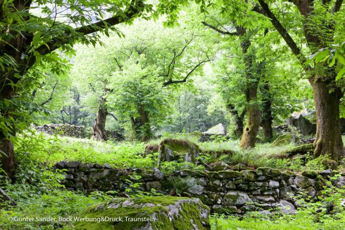 Wald Bavonatal